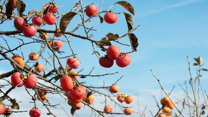 秋を味わう間もなく冬到来!久しぶりの投稿です。
